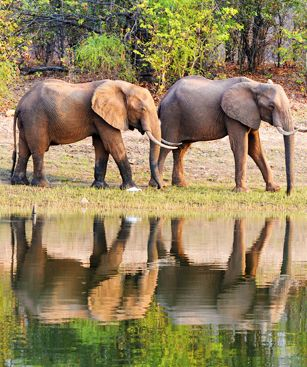 Harare Lac Kariba Elephants